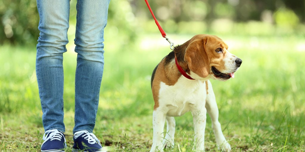 Volunteer ideas: walking dogs